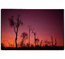 Afternoon Summer Glow Photographic Print