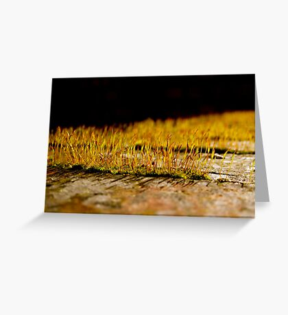 So Small, So Beautiful Greeting Card