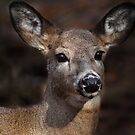 I'm All Ears :) by Bill McMullen