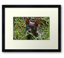 Hidden Curiosity Framed Print