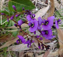 Purple Coral Pea (Hardenbergia violacea) by Daphne Gonzalvez