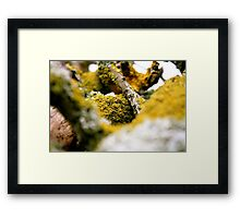 Growth from Nothing Framed Print