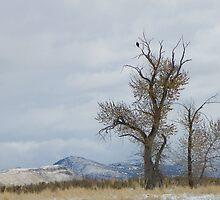 Bald Eagle Perch by BettyEDuncan