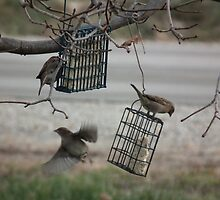Three Sparrows by Deb Fedeler