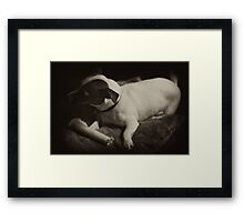 Macey posing dark with bone on pillow 1 Framed Print