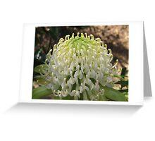 White Waratah Greeting Card