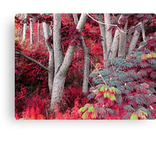 Autumn in May? Canvas Print