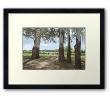 Centennial Winery vineyards Framed Print