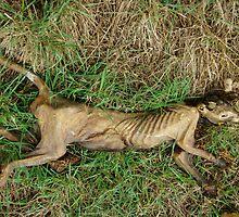 Mystery skeleton, Tasmania by wearehouse
