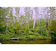 Arthur River, Tasmanian North West Coast Photographic Print