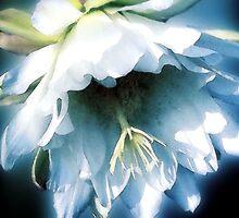 Cactus Blossom - November 19, 2011 by Ivana Redwine