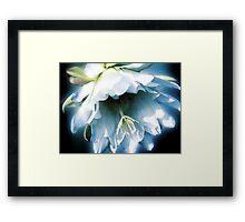 Cactus Blossom - November 19, 2011 Framed Print