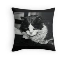 Portrait of a Stray Cat #1 Throw Pillow