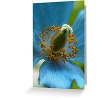 Blue Poppy - detail - Butchart Greeting Card