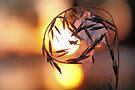 Kissed by the Sun by Jo Nijenhuis