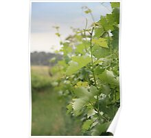 On the grape vine... Poster
