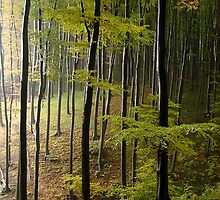 Autumn in Vienna forest. II by Bluesrose