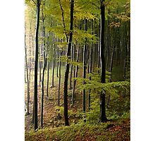 Autumn in Vienna forest. II Photographic Print