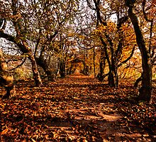Autumn Tree Tunnel by Leon Ritchie