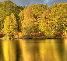 Golden Reflections by David Tinsley
