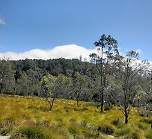 Blue Skies and Button Grass, Cradle Mountain,Tasmania, Australia. by kaysharp