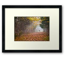 Deer Path Framed Print