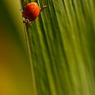 the ladybug by Manon Boily