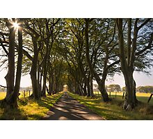Beech Avenue Photographic Print