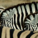 stripes and stripes by Martina  Stoecker