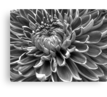 Monotone Macro Mum Bloom Canvas Print