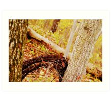 Barb wire in the woods. Art Print