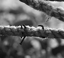 Nail Rope by evilcat
