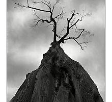 Horror Tree by LucaRosacuta
