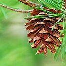 Pine Cone by Leon Heyns