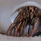 Hermit Crab by Lolabud