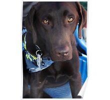 Make-A-Wish Canine Ambassador Doc Barker Poster