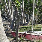 Bingil Bay boat and trees by STHogan