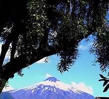 Tree and volcano Villarica in the distance, Chile by Camila Gelber
