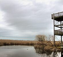 Winter Marshy Lookout by Erika Price