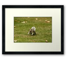 Charging Squirrel Framed Print
