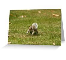 Charging Squirrel Greeting Card