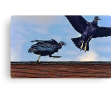 Vultures on the roof Canvas Print