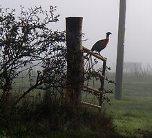 A Kentish Pheasant by mikebov