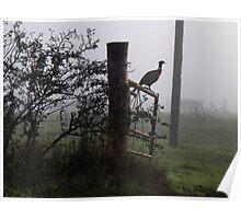 A Kentish Pheasant Poster