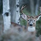 Buck Shot by Bill Maynard