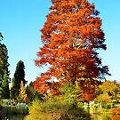 Tree and Lake by Steve