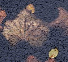 Leaf in Ice texture after  rain by Antanas