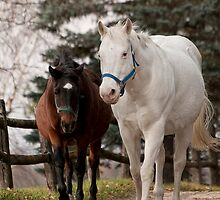 Amazing Horses of NNEP by Tracey  Dryka