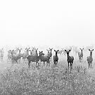 My Deer Friends 1 by Henrik Malmborg