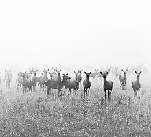 My Deer Friends 1 by Henrik Malmborg